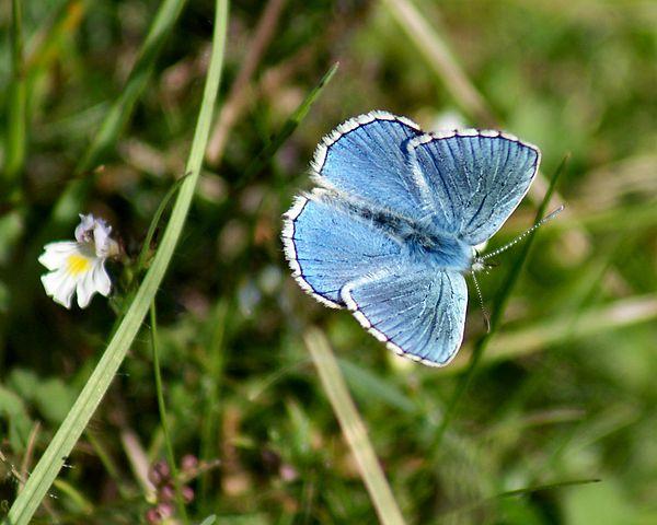 You are browsing images from the article: Aston Rowant - rezerwat przyrody na południowym wschodzie Anglii
