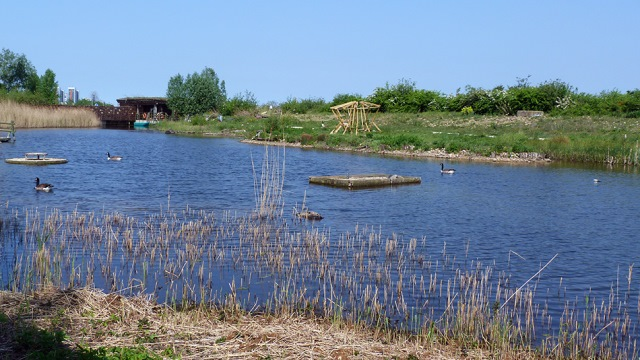 You are browsing images from the article: Greenwich Peninsula Ecology Park - rezerwat przyrody na półwyspie Greenwich