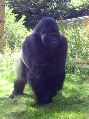 You are browsing images from the article: Port Lympne Wild Animal Park - park dzikich zwierząt