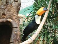 You are browsing images from the article: Discover Amazonia - największy w Szkocji tropikalny las pod dachem