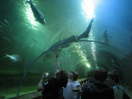 You are browsing images from the article: Deep Sea World - szkockie narodowe oceanarium w pobliżu Edynburga