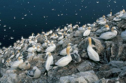 You are browsing images from the article: Scottish Seabird Centre - obserwatorium dzikiej natury w Szkocji