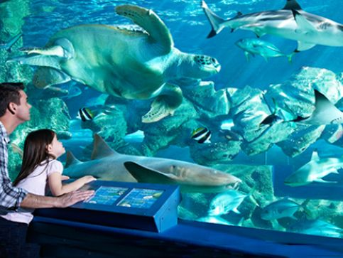 The Bournemouth Aquarium - Oceanarium